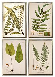 on framed fern wall art with art prints museum outlets