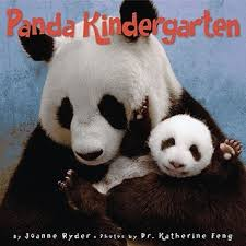 Quotes About Pandas Inspiration Panda Kindergarten By Joanne Ryder