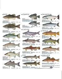 Texas Fish Chart My First Brush Set This Is A Set Of Brushes Of Freshwater