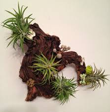 Air Plants and Moss Wall Garden - Living Wall Art - A Unique ...