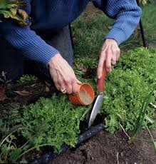 Heres The Scoop On Chemical And Organic Fertilizers Osu