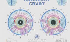 Dr Bernard Jensen Iridology Chart 65 Always Up To Date Iridology Eye Chart Dr Morse