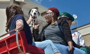 Alice, the Budweiser Clydesdales' mascot, is given some attention by Diana  Bearden, left, and Jenny Porter during a visit by the Clydesdales at the  Smith's Marketplace at 9710 W. Skye Canyo … |