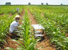 storliend field research 055