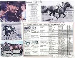 Race Horse California Chrome Kentucky Derby Preakness
