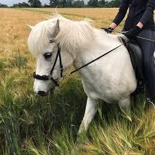 Instagram Explore Pferdespruch Hashtags Photos And Videos