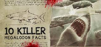 Shark Size Comparison Chart 10 Killer Megalodon Shark Facts Fossilera Com