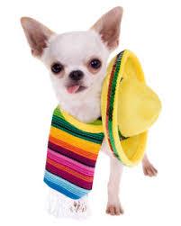 Image result for cinco de mayo dog