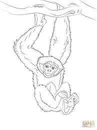 Gibbon Hangt In Een Boom Kleurplaat Gratis Kleurplaten Printen
