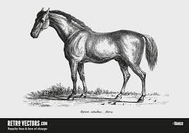無料イラストレトロ感がおしゃれ馬のベクター素材まとめ馬車