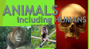 Image result for science year 4 animals including humans bbc bitesize