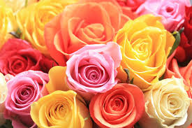 what does your rose tell you pure