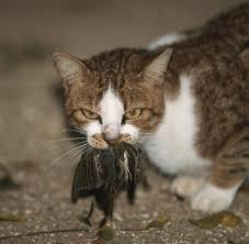 Tierpsychologie Katzen Ist Ihr Besitzer Im Zweifel Egal Welt