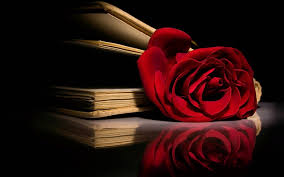 roses images red red rose hd wallpaper and background photos