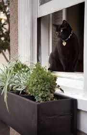 Build Window Box 42 Best Window Boxes Images On Pinterest