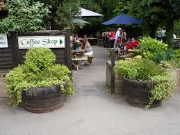 oak barrel planters in belton garden centre