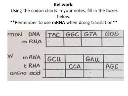 Bellwork Using The Codon Charts In Your Notes Fill In The