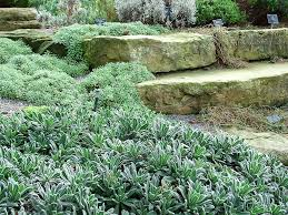 Rock Garden Ground Cover