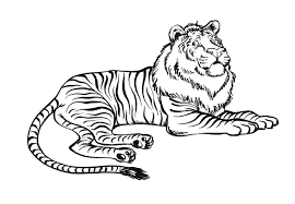 Coloriages Tigre Les Animaux Page 3