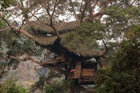 10 Coolest TreeHouses Restaurants You Always WantedCoolest Tree Houses