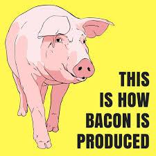 Image result for Pork farming