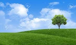 Green Summer Landscape Scenic View ...