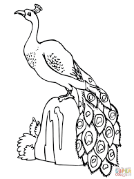 Small Picture Peacocks coloring pages Free Coloring Pages