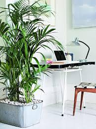 best indoor plants for office. Best Indoor Plants For The Office |