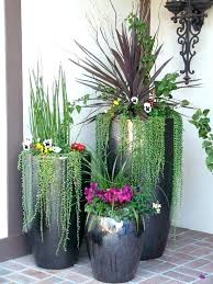 outdoor potted plants best for patio pots large tall