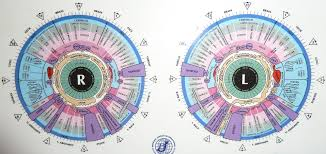 Bernard Jensen Iridology Chart Pdf Iridology Chart Iriscope Iridology Camera Iriscope