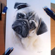 Drawingcolor Dog Color Pencil Drawing By Atomiccircus On Deviantart