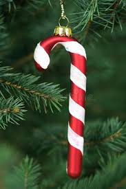 How To Decorate A Candy Cane Christmas Tree Candy Cane Hanging On A Christmas Tree Stock Photo Image of 39