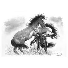 wild horse drawings in pencil.  Wild Fighting Wild Stallions In Wild Horse Drawings Pencil D