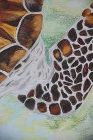 Small Picture Colored Pencil Sea Turtle Emmas Collage