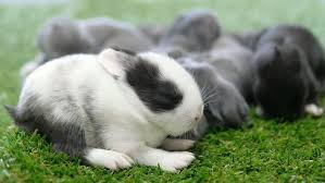 artificial grass for pets. Bunnies And Fake Grass Artificial For Pets