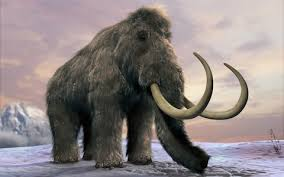 Woolly Mammoth Seating Chart Booming Trade In Mammoth Ivory Fuels Fears Over Elephants