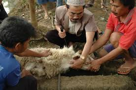 Image result for foto potong qurban