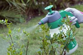 garden insecticide. Quick Facts Garden Insecticide