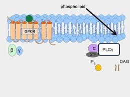 Gpcr Signaling Animation Of G Protein Receptor Signaling