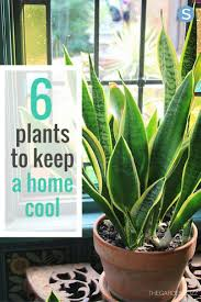 Here Are 6 Plants That Will Help Keep Your House Naturally Cool