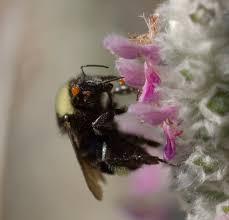 When Varroa Mites Hitch A Ride Bug Squad Anr Blogs