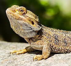 petsmart reptiles for sale.  Petsmart New Pets In Petsmart Reptiles For Sale