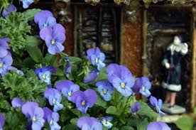 29 flowering plants to add to your fall garden in south louisiana nola com