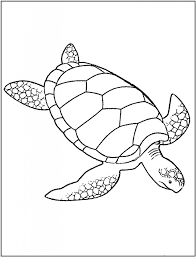 11 best stained glass patterns images on sea turtles coloring