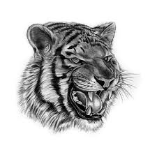 tiger roar tattoo.  Tattoo Tiger Roar In Tattoo Y