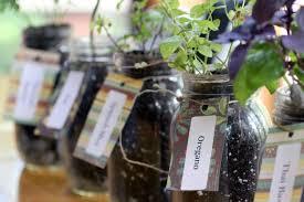 grow herbs indoors using mason jars