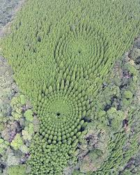 In 1973 Japan Planted An Experimental Forest Today It Looks Like