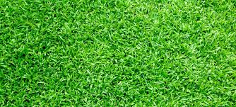 Artificial turf Landscaping Why Is Artificial Turf Good Investment For Your Home Ecograss Artificial Turf And Grass Installation In Los Angeles The Home Depot Why Is Artificial Turf Good Investment For Your Home Ecograss