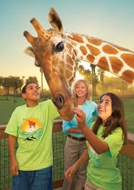 busch gardens summer camp. Fine Busch And Busch Gardens Summer Camp F