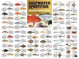 Rockfish Identification Chart
